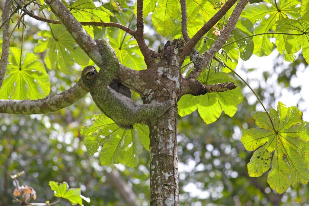 Curi Cancha Monteverde Private Reserve
