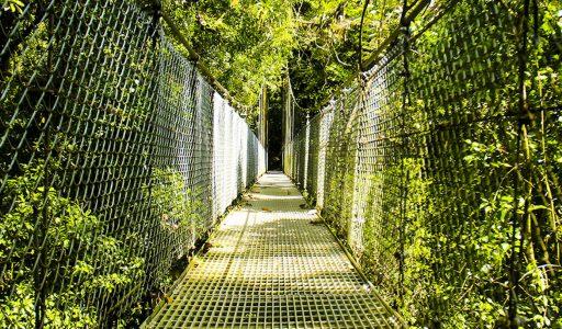 mistico hanging bridges tour