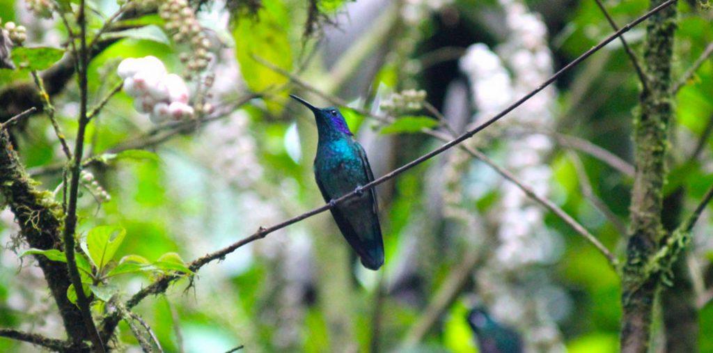 Monteverde Green Adventure in Selvatura Park