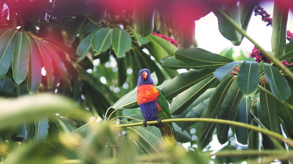 Private Tours Costa Rica