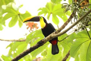 Costa Rica VAcations Wildlife
