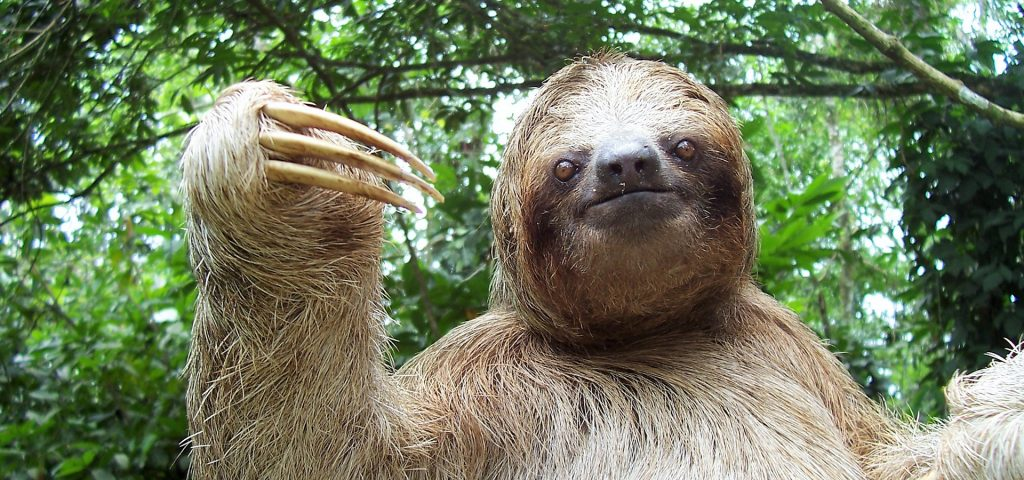 Sloth Sanctuary and Waterfall Experience