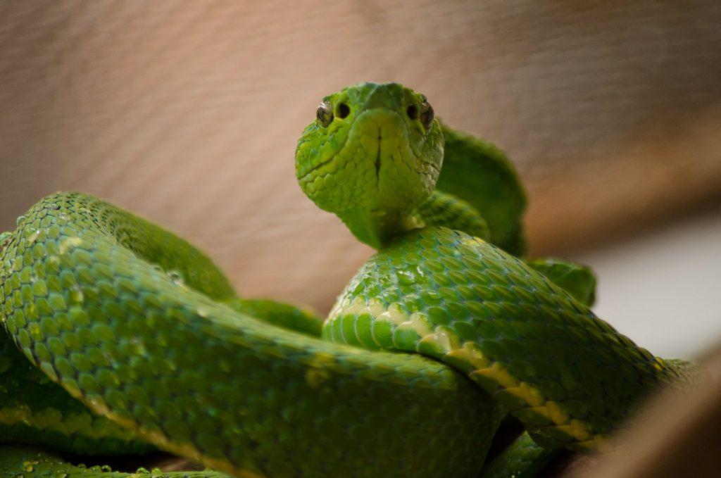 Monteverde Green Adventure in Selvatura